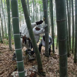 竹伐採作業開始