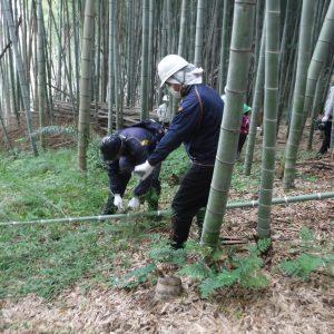 竹伐採作業中
