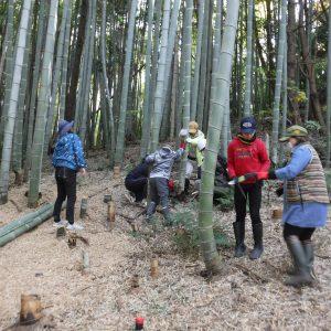 竹の伐採作業開始