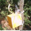 フクロウ雛の巣立ち
